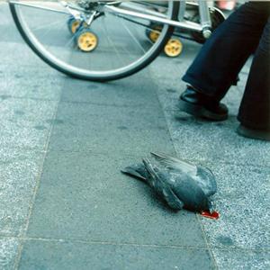 Vorsicht Taube