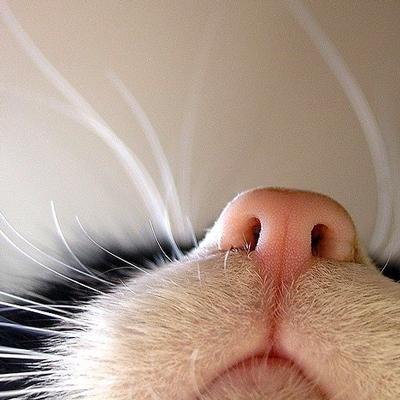 Der Mundgeruch meiner Katze