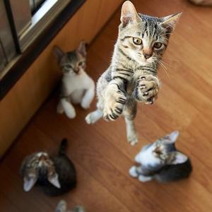 Die katzenquälende Hilde