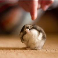 Der ungeliebte Hamster