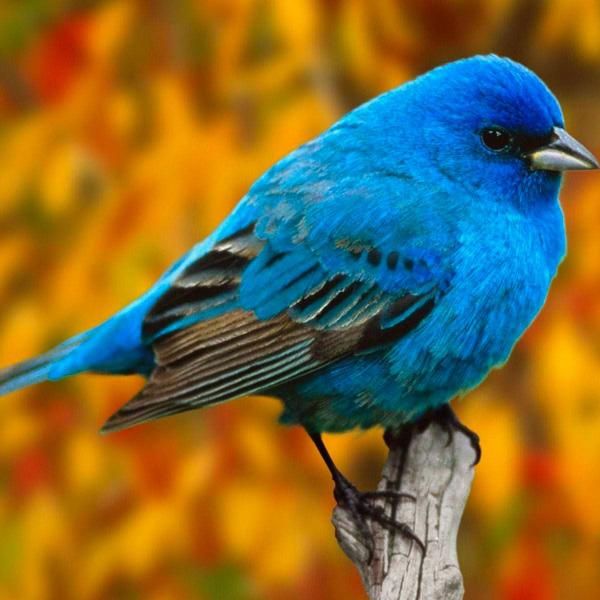 Der nervige Vogel