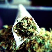 Legalisierung von Cannabis