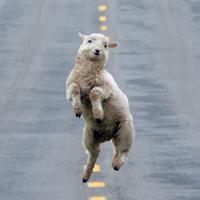 Fang das Schaf!