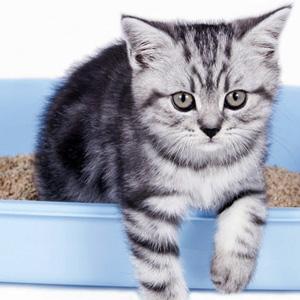 Katzenkot riecht extrem gut