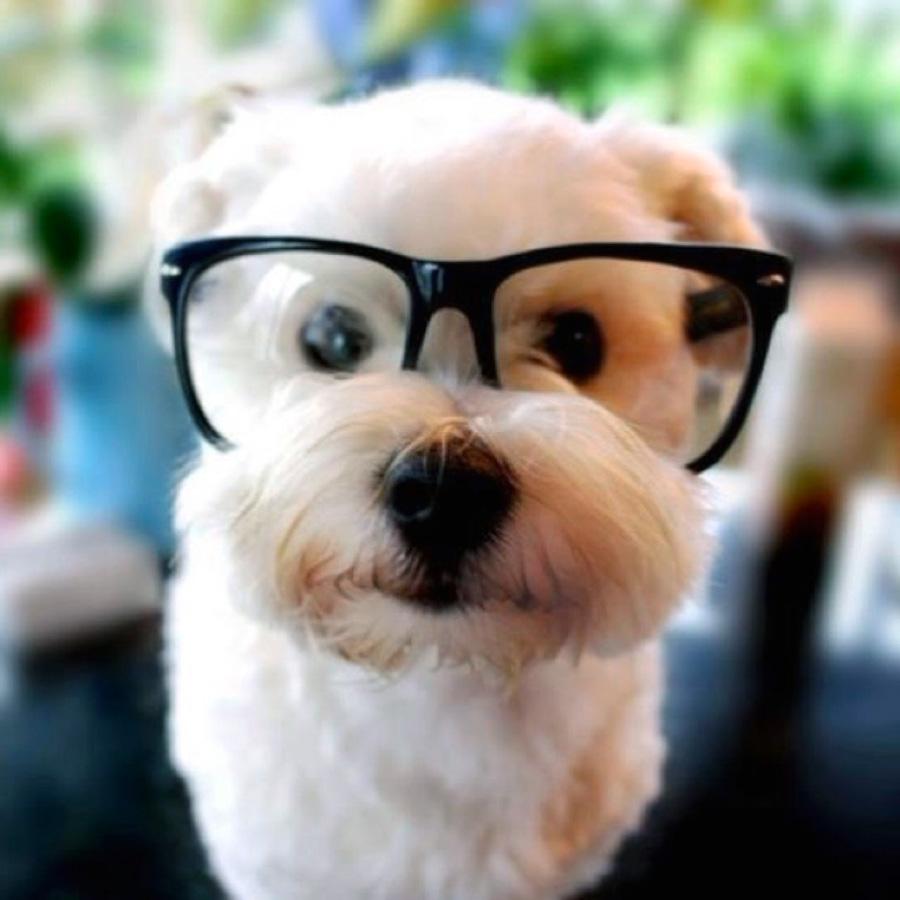 Arschloch mit süßem Hund